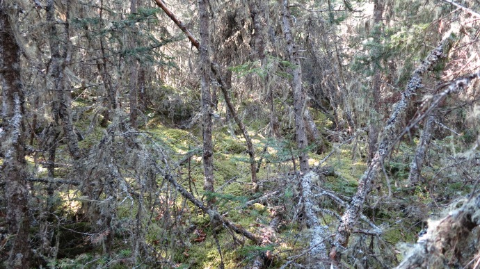 Helen Island forest. 2012 (photo Susan Lee)